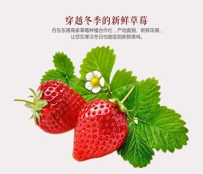 这是一张关于九九草莓 20克以上 丹东东港秸秆氨基酸九九草莓诚招全国代理商的产品图片
