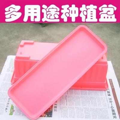 江苏宿迁沭阳县花盆