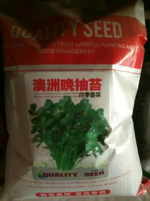甘肃省武威市古浪县香菜种子