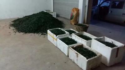 这是一张关于朝天椒 2~5cm 中辣的产品图片