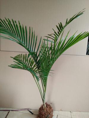 广西钦州造型假槟榔树