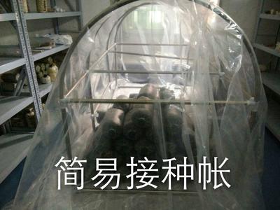 湖北武汉食用菌简易接种帐