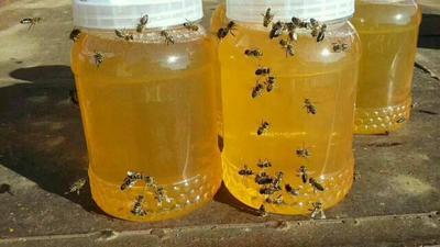 这是一张关于椴树蜜 塑料瓶装 100% 2年以上 黑龙江,黑蜂,蜜源森林椴树,花香味甜的产品图片