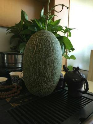 山东烟台西州蜜瓜 2斤以上