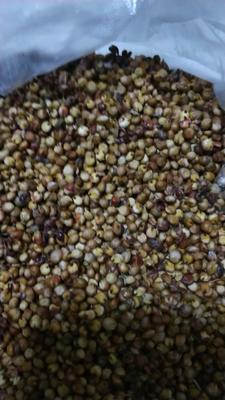 山西忻州红高粱 霉变 ≤1% 1等品