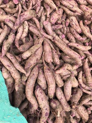 安徽宿州灵璧县越南紫薯 3两以上