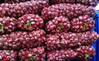 这是一张关于杞县大蒜 混级统货 多瓣蒜的产品图片