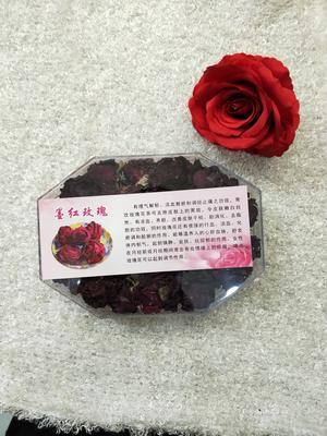 青海西宁法国墨红玫瑰