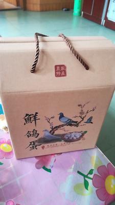 河北石家庄白羽王 食用 礼盒装