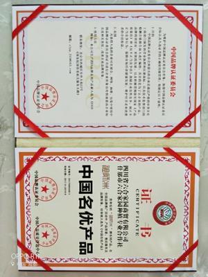 这是一张关于金丝皇菊 礼盒装 恒温长期保存 特级的产品图片