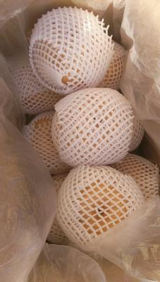 这是一张关于晚秋黄梨 550-600g 70mm以上的产品图片