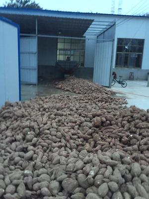 浙江杭州红薯渣