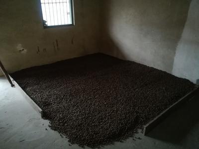 广西柳州油茶籽