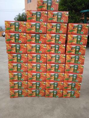 广西桂林沙糖桔 4 - 4.5cm 1.5 - 2两