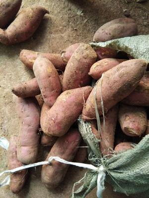 这是一张关于苏薯八号红薯 红皮 3两以上的产品图片