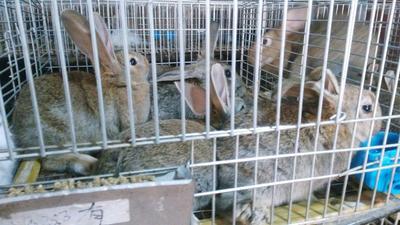 湖南娄底双峰县兔肉类 1个月 新鲜