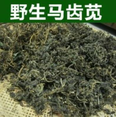 江苏宿迁马齿苋干菜 6-12个月