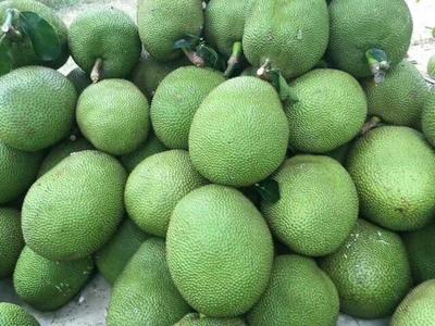 这是一张关于泰国菠萝蜜 15斤以上的产品图片