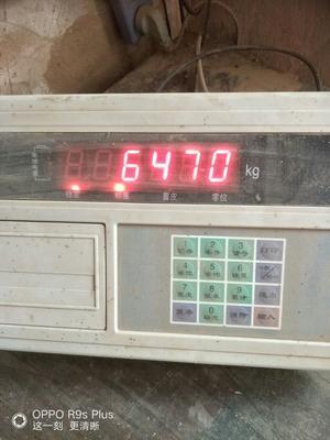 这是一张关于农大3753的产品图片