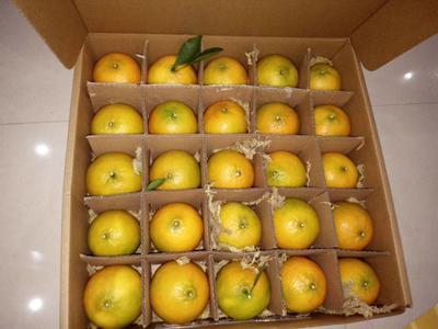 这是一张关于黄帝柑 5.5 - 6cm 3两以上的产品图片