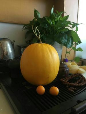 这是一张关于黄蜜瓜 1斤以上的产品图片