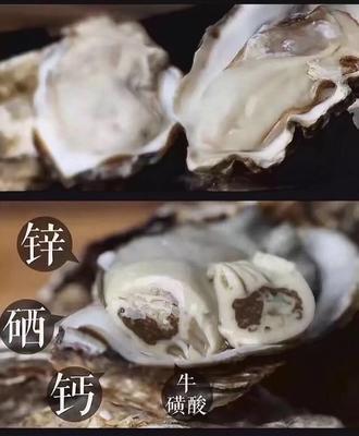 这是一张关于威海牡蛎 野生 5-10只/龙8国际官网官方网站的产品图片