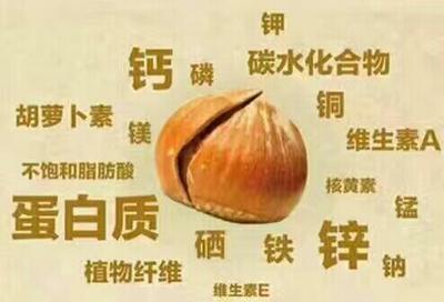 吉林白山靖宇县榛子 24个月以上 包装