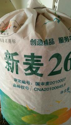 河南许昌鄢陵县新麦26