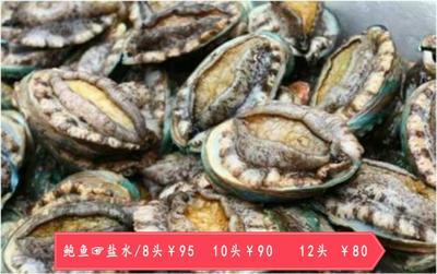 上海宝山区盐水 人工殖养