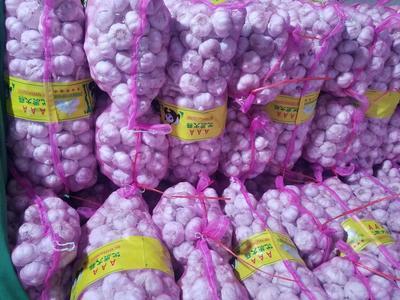 这是一张关于金杞牌大蒜 混级统货 多瓣蒜的产品图片