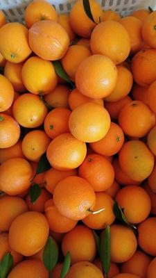 赣南脐橙 75 - 80mm 4-8两