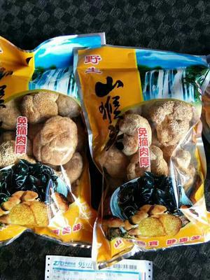 吉林白山野生干猴头菇 袋装 1年以上