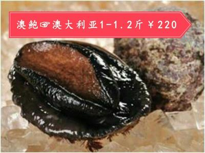 上海宝山区澳洲绿唇鲍 人工殖养