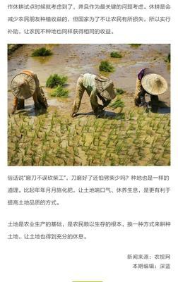湖北孝感汉川市杂交稻 中稻