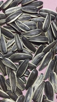 601葵花籽