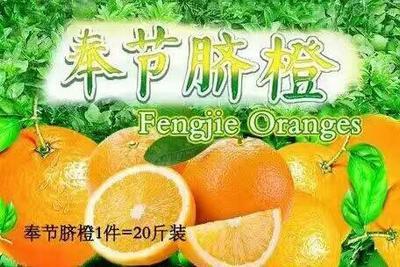 这是一张关于奉节脐橙 70-75mm 4-8两的产品图片