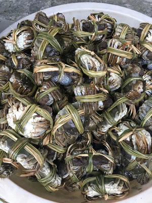 江苏苏州昆山市苏州太湖大闸蟹 2.0两以下 公蟹