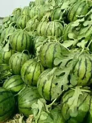 这是一张关于京欣西瓜 有籽 2茬 8成熟 8斤打底的产品图片