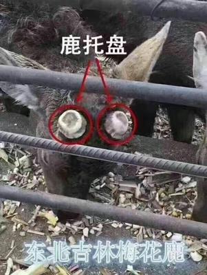 吉林省长春市双阳区鹿角