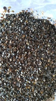 天津塘沽荞麦壳