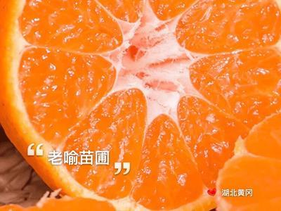 这是一张关于碰柑苗 嫁接苗 0.5~1米的产品图片