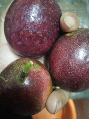 广西玉林容县紫红色百香果 80 - 90克 超大果和苹果比拼