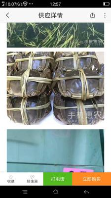 贵州遵义红花岗区洪湖大闸蟹 2.0-2.5两 母蟹