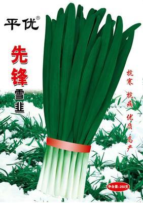 安徽合肥巢湖韭菜种子