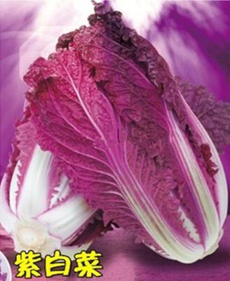 河北省唐山市丰南区紫白菜 2~3斤 净菜