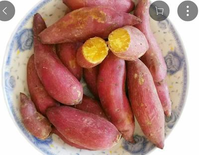 陕西渭南大荔县板栗薯黄心小红薯 2两以下