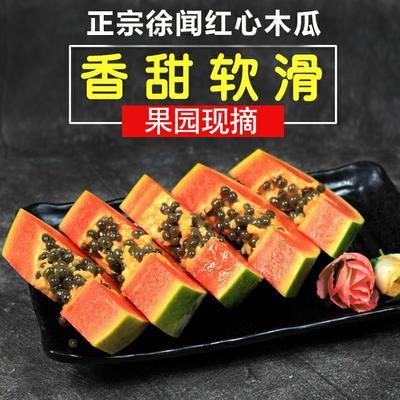 广东湛江徐闻县红心木瓜 1 - 1.5斤