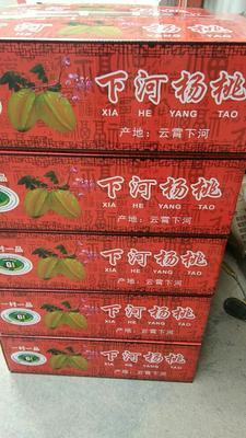 福建漳州下河杨桃 4 - 5两