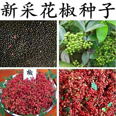 江苏宿迁沭阳县花椒种子