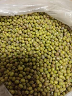 内蒙古兴安扎赉特旗东北绿豆 散装 2等品